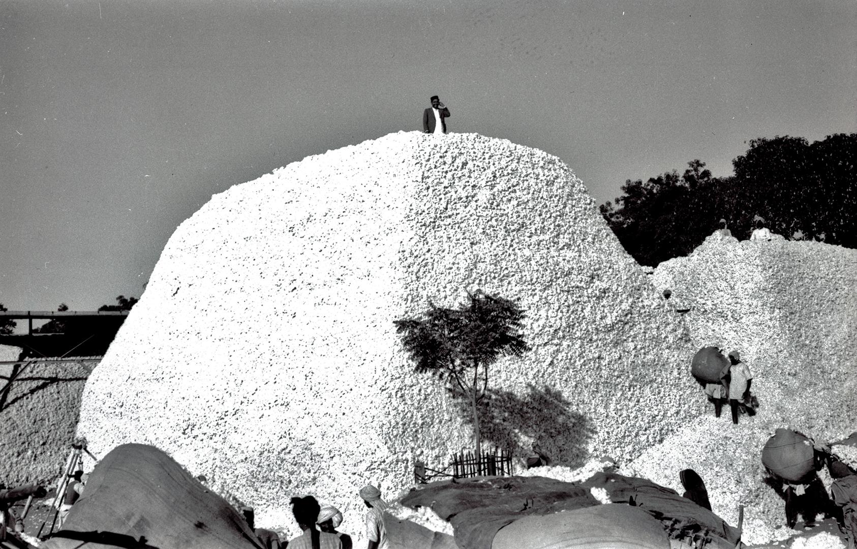 Baumwolle wird in Zentralindien gelagert, an die Küste transportiert, verschifft und in Europa verarbeitet. Die Firma Volkart handelt mit indischer Baumwolle, ab den 1930er-Jahren aber mit grossen Verlusten infolge der Weltwirtschaftskrise und der indischen Unabhängigkeitsbewegung.