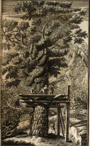Waldwirtschaft im 18. Jahrhundert. Illustration aus dem Buch von Hanß Carl von Carlowitz.